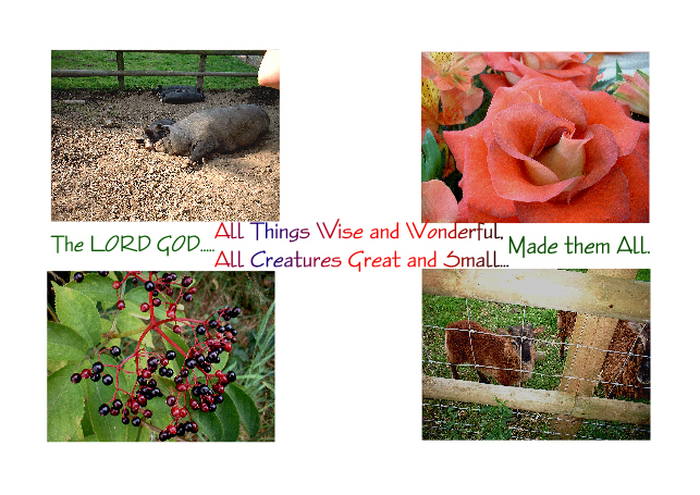 All Things Wise and Wonderful....All Creatures Great and Small...The LORD GOD Made them All.