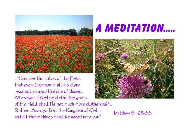 A Meditation on Jesus' Words about the Beauty of the Lilies of the Field...
